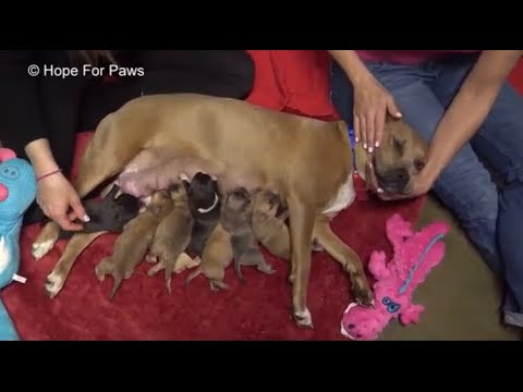 Hope for paws rescue a pitbull mom with a lot of puppies during a storm