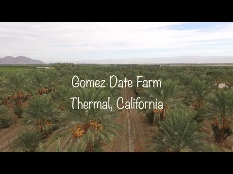 Phoenix Agrotech Medjool Date Farm Thermal, California