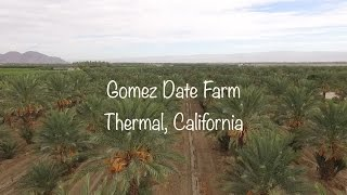 Phoenix Agrotech Medjool Date Farm Thermal, California