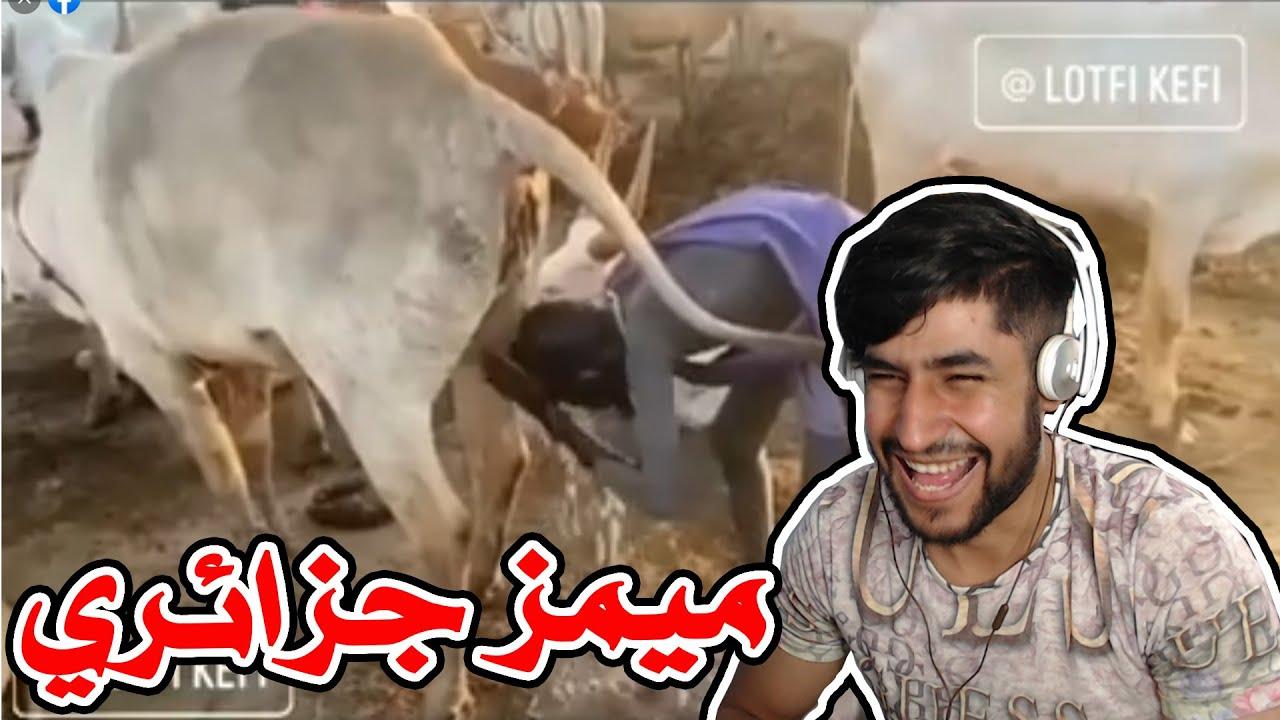 Algerian memes 12 - افضل ميمز جزائري