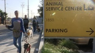 Dog Man Helps Laas Volunteers Train And Socialize Dogs That Are For Adoption
