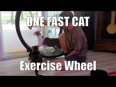 The One Fast Cat Exercise Wheel