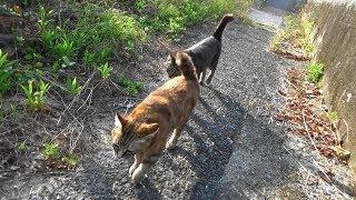 野良猫親子 猫親子の朝ご飯と朝散歩
