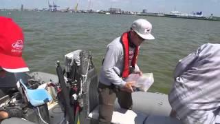 Ловля судака в Куршском заливе.