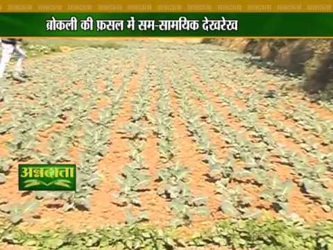 All You Want To Know About Broccoli Cultivation