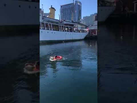Man Jumps in Halifax Harbour to Save Bird 2017