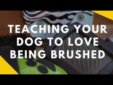 Teaching Your Dog To Like Being Brushed