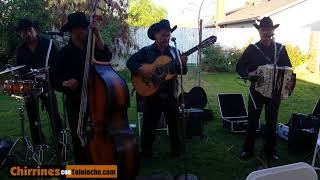Las medias Negras - Chirrines Con Tololoche 818-290-4645