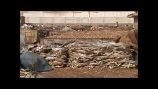 CAOPA - La pêche au Sénégal