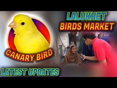 Lalukhet Sunday birds Market 18-3-2018 Latest Updates Jamshed Asmi Informative Channel In Urdu/Hindi