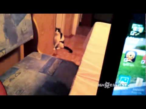 Let's Play A Game! Cat vs. Human