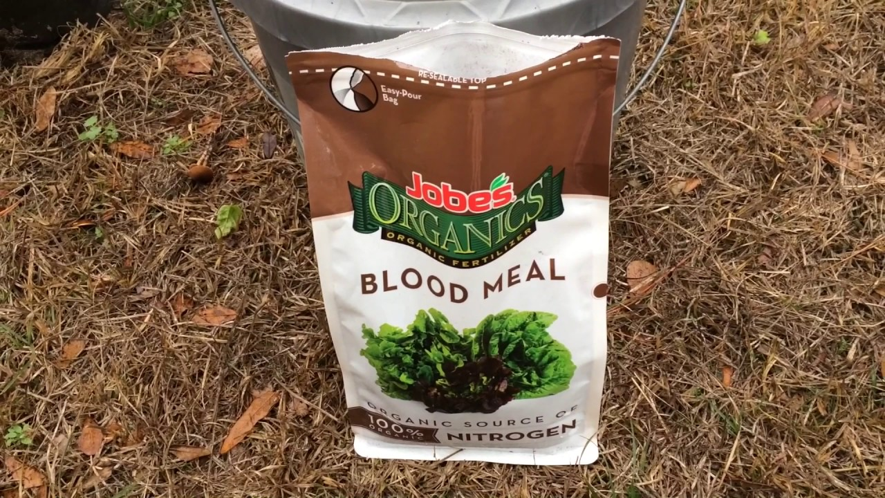 Using blood meal (nitrogen supplement)on plants in the garden. - YouTube