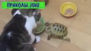 Черепаха гоняет котов / Tortoise chasing cats