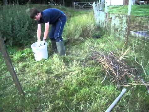 How to make organic nettle plant fertilizer youtube - Organic flower fertilizer homemade solutions ...