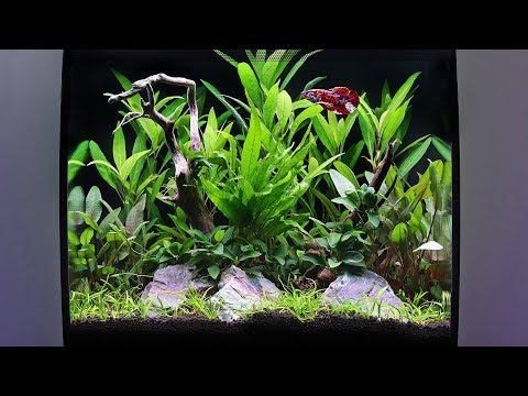 How to Aquascape a Fluval Flex Planted Tank
