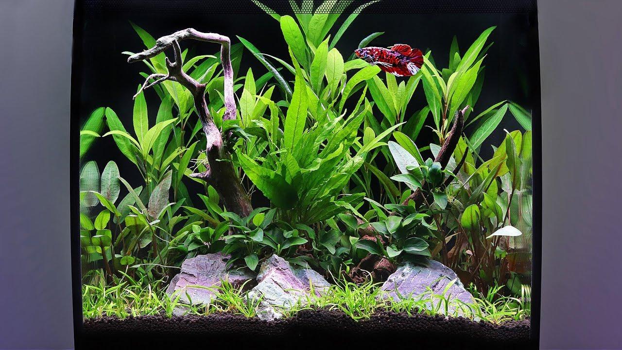 How to Aquascape a Fluval Flex Planted Tank - YouTube