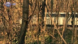 Цветелина Янева - Авторът е друг