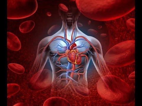 Nutrition & Heart Disease: 7 Major Blood Tests & Cholesterol Myths