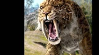 Evolución del tigre