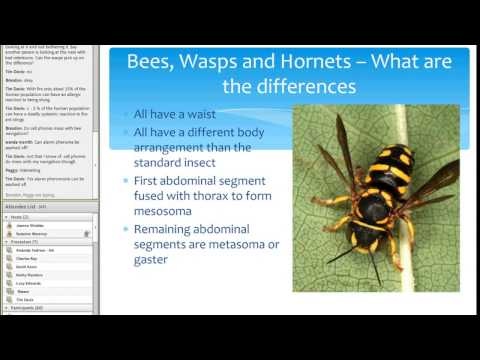 Bees, Wasps and Hornets - They're all Different