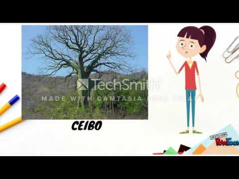 Clasificación De Las Plantas Según Su Utilidad Para El Ser Humano