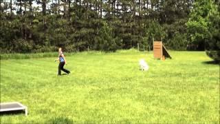 Biggie (white German Shepherd) Trained Dog Demonstration Minneapolis