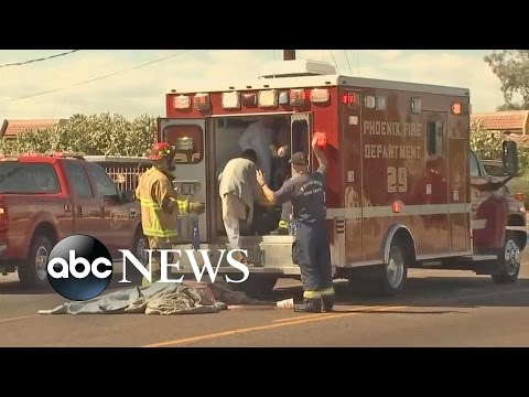 Arizona Bee Attack | At Least a Dozen People Injured