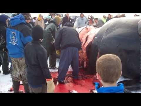 Alaska Whaling Barrow