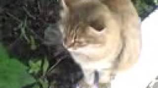 Моя кошка Мура гуляет!!