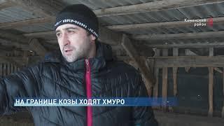 Шерстяная контрабанда стадо украинских коз переправили на Дон в обход пограничных пунктов
