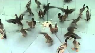 офигевшие животные!!!страшно интерсно!!!смотреть всем!!!