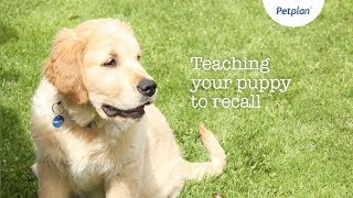 Dog Recall Training   Puppy Training Tips   Petplan