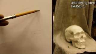 Обучение рисунку. Портрет. 5 серия: наброски черепа