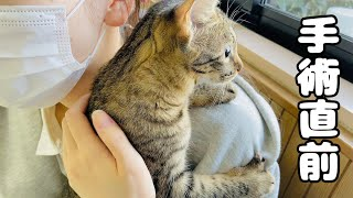手術直前の健診で震える子猫