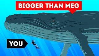 Sea Creature Size Comparisons Will Make You Feel Small