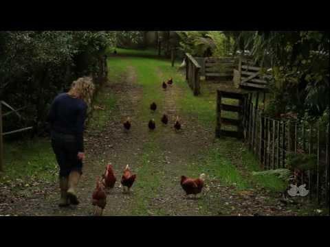 The Animal Sanctuary - New Zealand