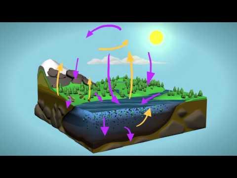 NASA | Plant Productivity in a Warming World