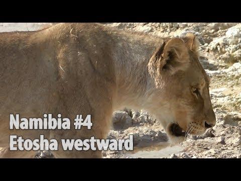 Namibia part 4: Etosha-from Mokuti Lodge to Okaukuejo Lodge / travel guide & tips