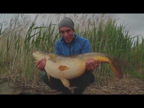 Karpfenangeln - We fish active (HZ Baits)