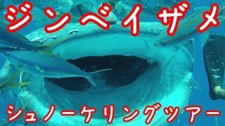 沖縄県読谷村ジンベイザメのシュノーケリングツアーに参加してきました ...