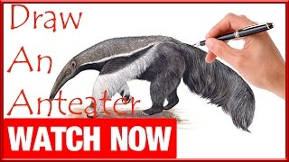How To Draw An Anteater - Learn To Draw - Art Space