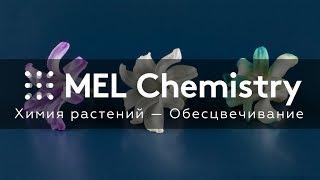Эксперимент «Обесцвечивание» из набора «Химия растений»