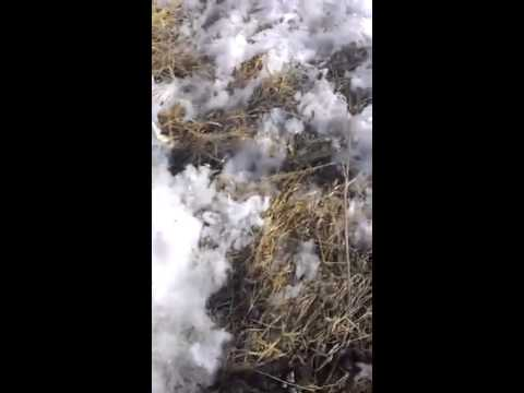 Видео Агафангел