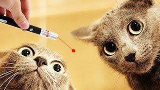 ШОК! Реакция на лазер. Милые котики , котята, забаывные коты