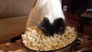 Popcorn Face Warming Cat