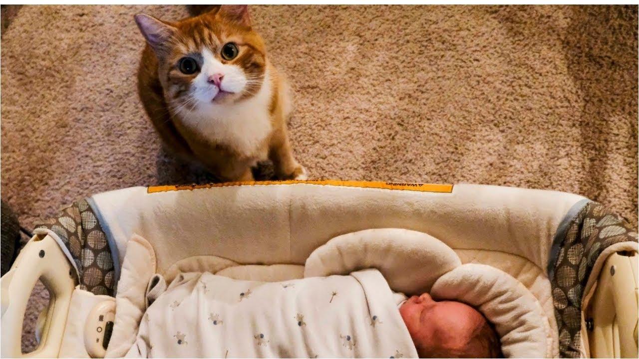 alprazolam and cats