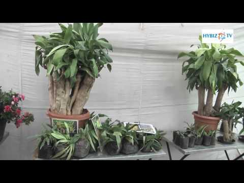 Bonsai Trees - All India Horticulture & Agriculture Show 2016 - hybiz