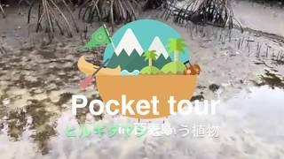 【西表島オンラインツアー】マングローブ根っこの秘密!