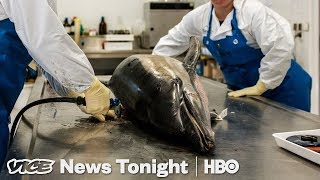 Dead Dolphins Are Washing Up On France's Shores (HBO)