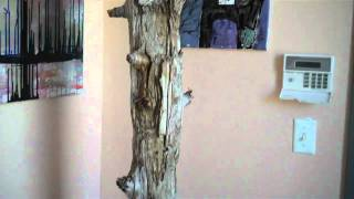 Coat Rack Made From Drift Wood